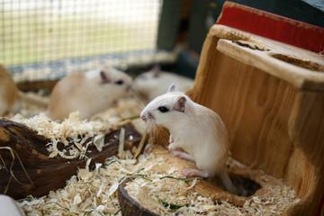 Eine kleine Maus die nicht davon läuft obwohl sie es könnte