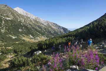 The Pirin mountains with Vihren peak distant, the highest point in the range, Bulgaria, Europe