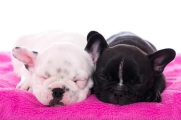 Zwei schlafende Welpen