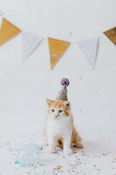 Kitten birthday celebration