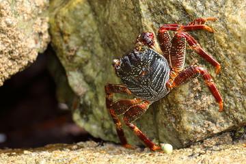 Krebse und Krabben aus Sri Lanka