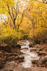 landscape of waterfall in autumn season,Japan