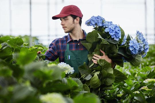 Florist Examining Plants While Holding Hydrangea Flowers