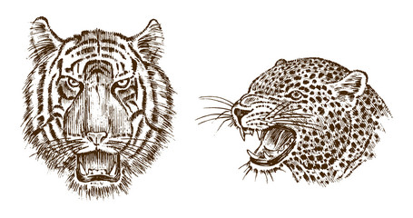 Japanese Wild Tiger and animal leopard. Asian Wild cat. profile of head or face. Tattoo artwork. Engraved hand drawn in old vintage sketch. Vector surreal illustration, badges, print for t-shirt.