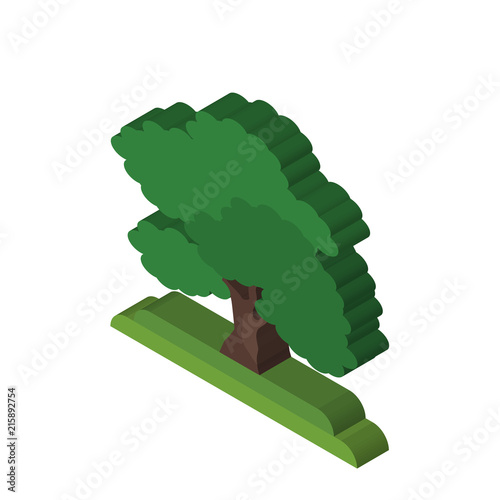 Black Walnut tree isometric right top view 3D icon