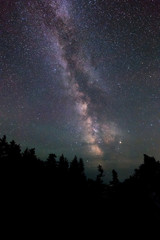 The Milky Way Over The Forest