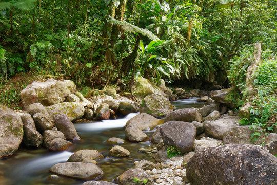 Martinique, FWI - Alma river in Saint-Joseph