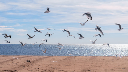 Flock of seagull birds flying in the air against beautiful cloudy sky and ocean in the background. Yellow sand beach at the bottom of the picture. Good weather with sun sparks on the water surface.