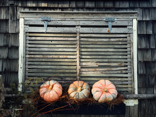 Three decorative pumpkins sit in a window box in front of a shut