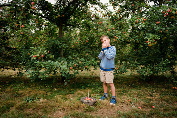 boy picking apple in orchard