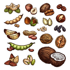 Nuts and bean seeds vector natural sketch