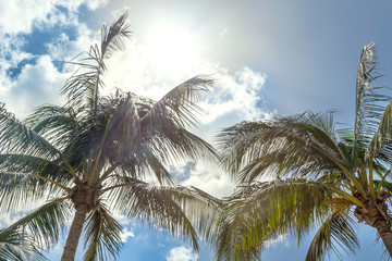 Sunny day, bright sun and palm trees in a tropical climate day, Marco Island, Florida.