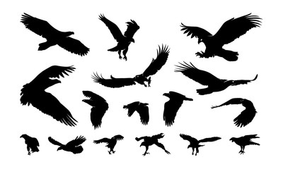 Set of Eagle Bird Silhouette vector illustration
