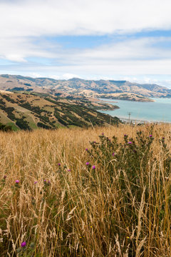 View across rolling hills to the natural harbour of Akaroa, New Zealand