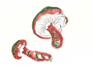Drawing with watercolors: two mushroom.