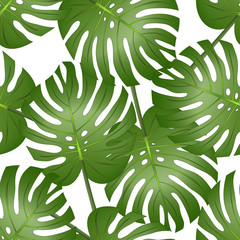 Philodendron Monstera Leaf Seamless isolated on White Background.