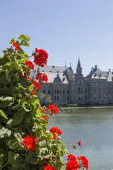 Bush of geranium on the background of buildings Binnenhof