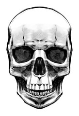 Female skull painted with texture brush