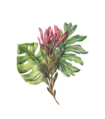 Composition of monstera palms leaves and protea, safari sunset flower, colored pencil illustration isolated on white background. Hand drawn floral composition of two palm leaves and protea flower