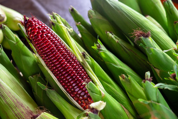 Red Ruby Corn, Thailand Healthy Organic Vegetable with Nature Sweet Taste
