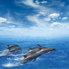 Dolphins jumping out of clear blue sea, blue sky with white clouds