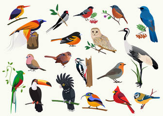 Various cartoon birds collection for any visual design. Fotobehang