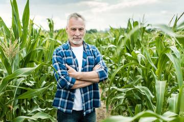 Senior farmer standing in a corn field