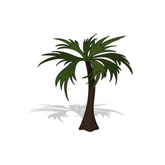 Plant in isometric style. Cartoon tropical tree on white background. Isolated image of jungles palm. Vector illustration