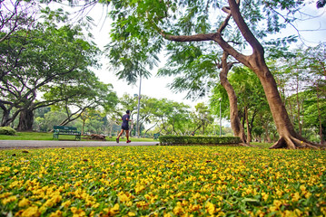 People jogging in the garden amidst yellow flowers.