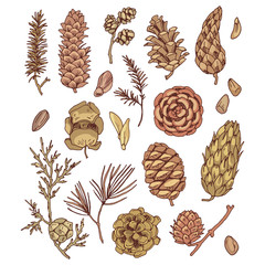 Cones and seed set of vector drawings for design and illustration.