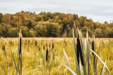 Europe. Latvia. Beautiful colourful summer nature