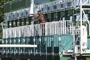 horse in panic tries to escape from the start gate before the race