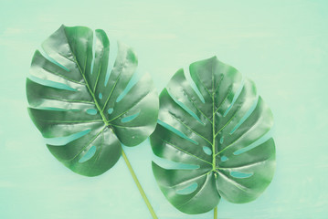 Tropical Monstera leaves over blue wooden background. Flat lay.