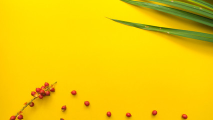 Leaves nature and red Fruit of the palm yellow background