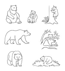 Brown bears in contours - vector illustration