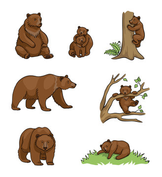 Brown bears - vector illustration