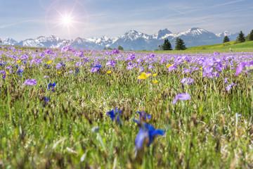 Frühlingswiese mit Sonnenstrahlen und Enzian