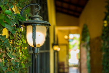 climbing plants with lantern on the wall