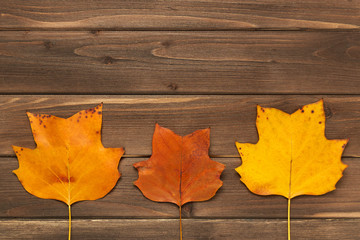 Autumn frame for your idea and text. Autumn fallen dry leaves of yellow, red, orange, lined in the middle of the frame on an old wooden board of brown color. The pattern of autumn. View from above