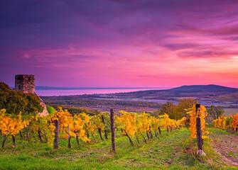 Colorful sunset over vineyards at lake Balaton, Hungary
