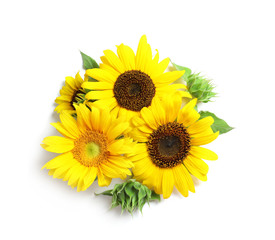 Beautiful bright sunflowers on white background