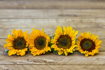 sunflowers on wooden background (Helianthus)