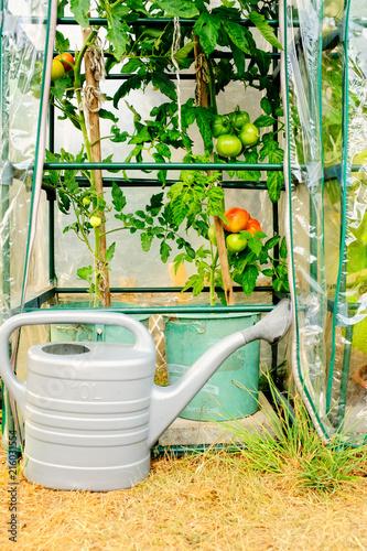 Kleine Gewachshaus Mit Tomaten Pflanzen Stock Photo And Royalty