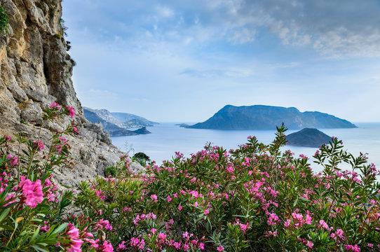 Romantic travel destinations. Spring flowers on Kalymnos Island, Greece