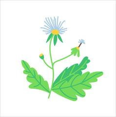 vector dandelion illustration. hand drawn wild flower.