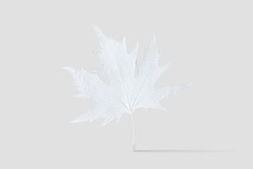 White painted autumn leaf on white background. Minimal season concept.