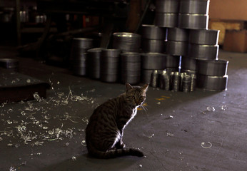 A cat is pictured beside aluminium utensils at a factory for household items in Capiata