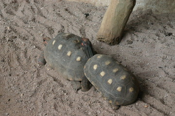 Two turtles