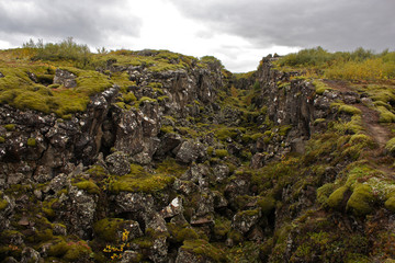 Icelandic Jungle