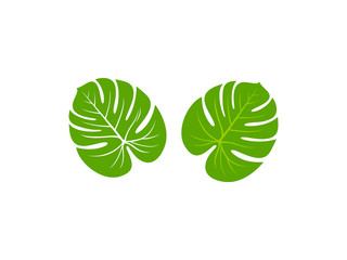 Monstera leaf icon vector illustration